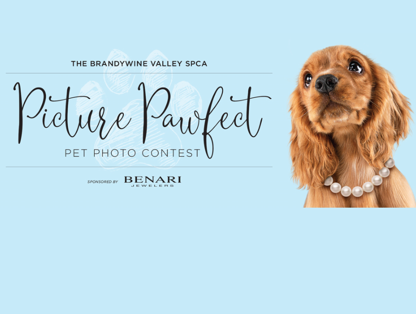 Picture Pawfect Brandywine Valley SPCA